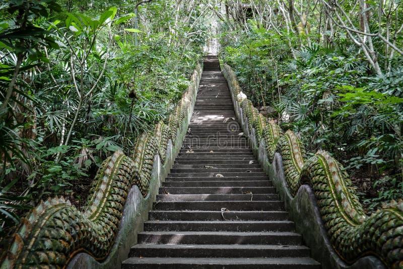 Lång trappa med inget i mitt av djungeln, tempeltrappa i skogen royaltyfri bild