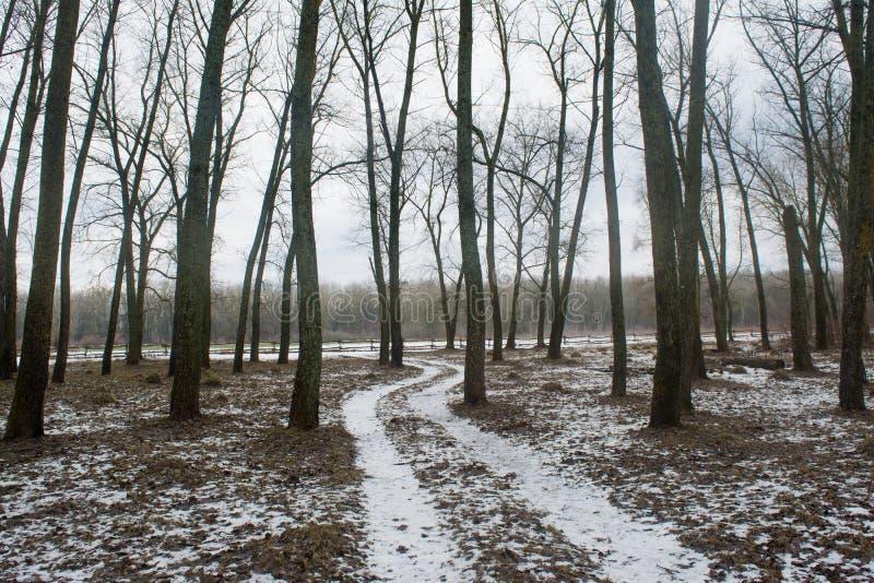 Lång väg mellan träd i den mörka skogen för vinter under februari arkivbild