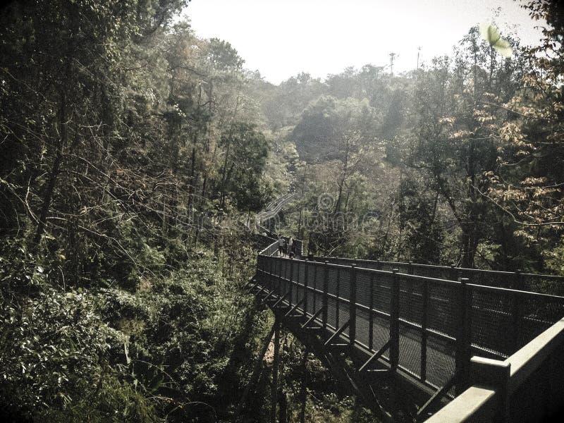 Lång väg till den djupa naturen arkivbilder