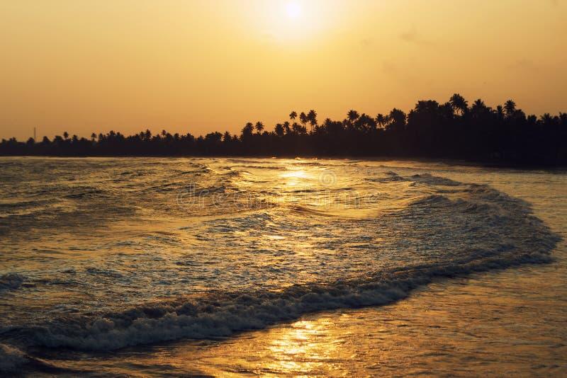 Lång våg, guld- solnedgång på havkusten i vändkretsarna Kontur av palmträd på horisonten arkivfoto