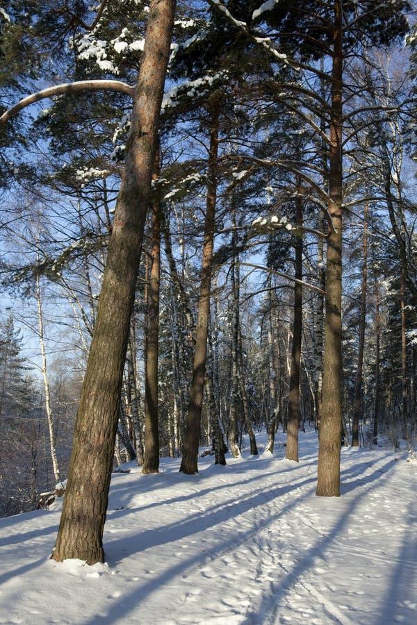 lång vinter för mörkerskog royaltyfri bild