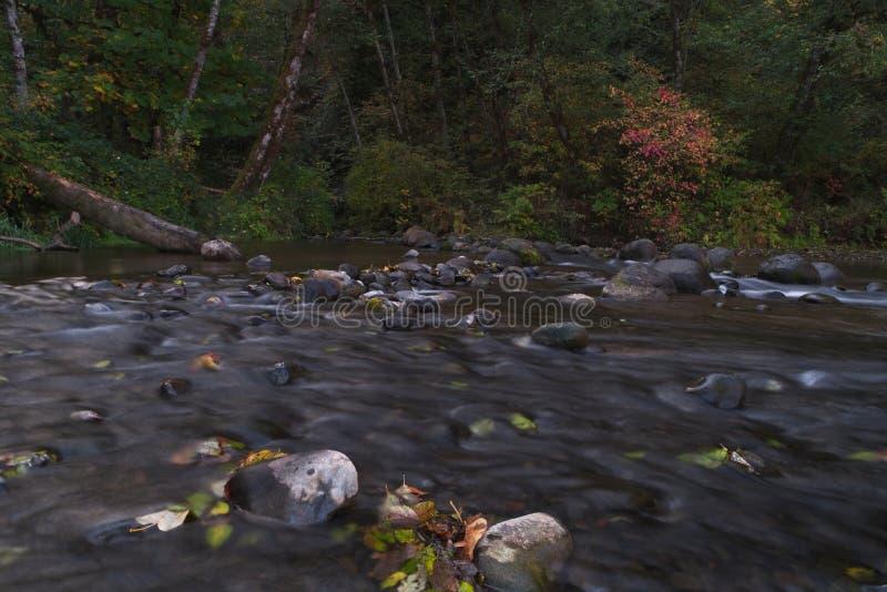 Långa exponeringsfotografier av den rullande floden med nedgånglövverk royaltyfri foto