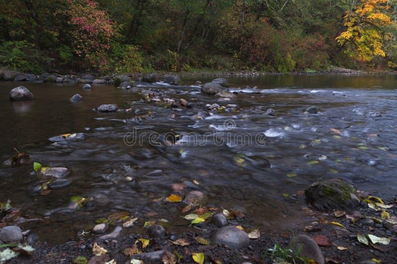 Långa exponeringsfotografier av den rullande floden med nedgånglövverk royaltyfria foton