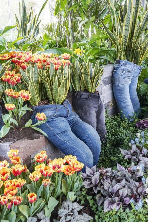 Långa flåsanden som används som planters med Sansevieria, tulpan och olika lövverkväxter royaltyfri bild
