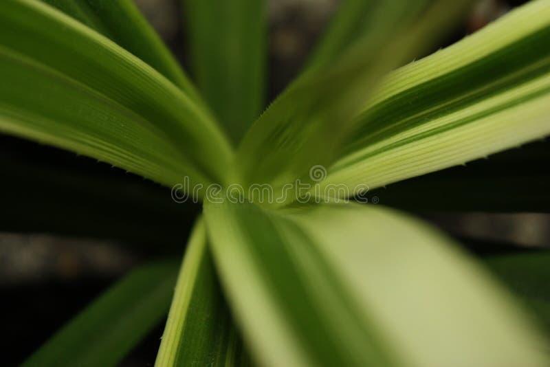 Långa gröna sidor med törnar royaltyfri foto
