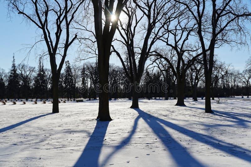 Långa skuggor med vintersolen Assiniboine parkerar, Winnipeg, Manitoba, Kanada arkivbild