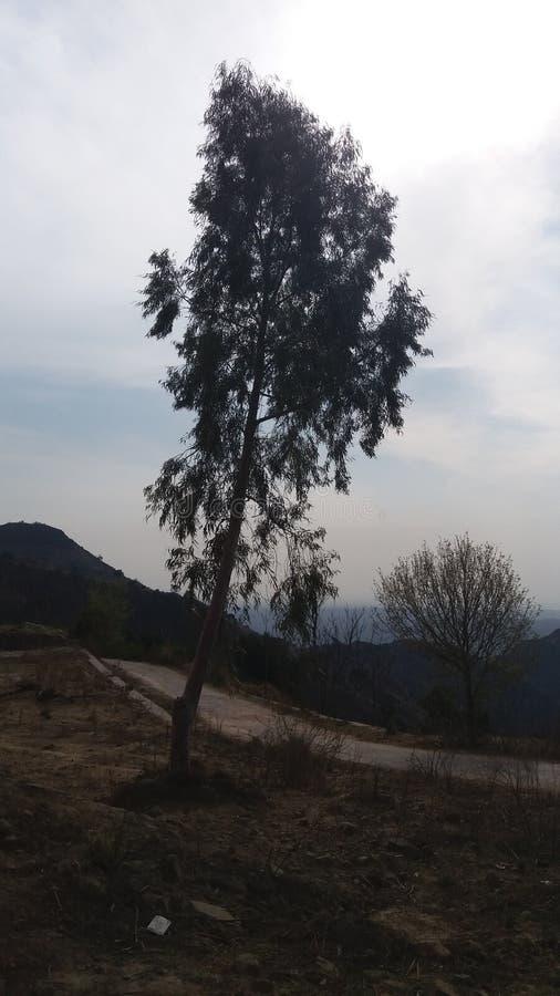 Långa träd royaltyfri foto