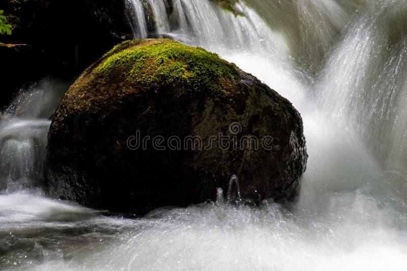Långt exponeringsvatten som faller i en Moss Covered Woodland Stream arkivbilder