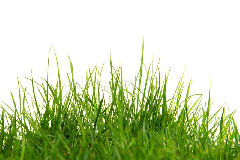 Långt grönt gräs på en vit bakgrund royaltyfri foto