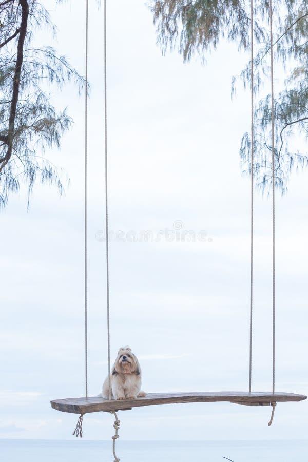 Långt hårhund och hav arkivbilder