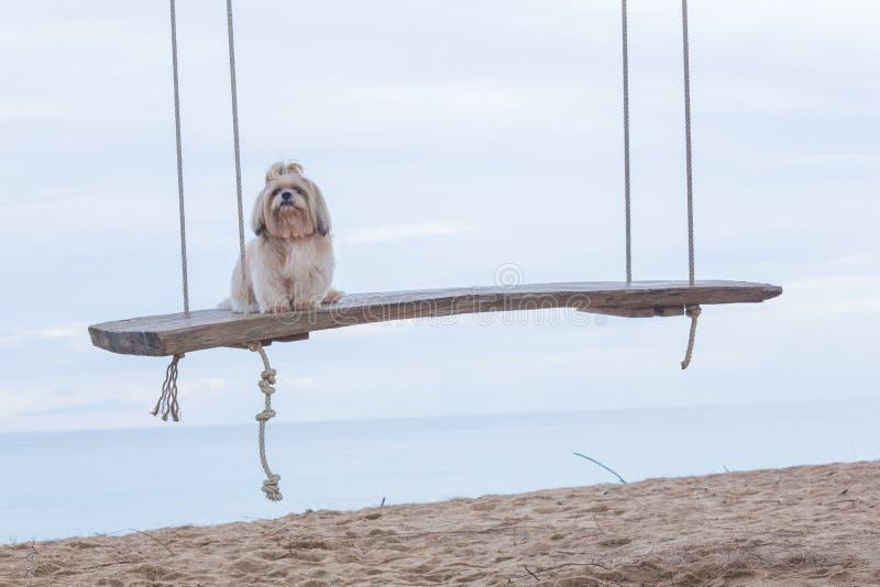 Långt hårhund och hav royaltyfri fotografi