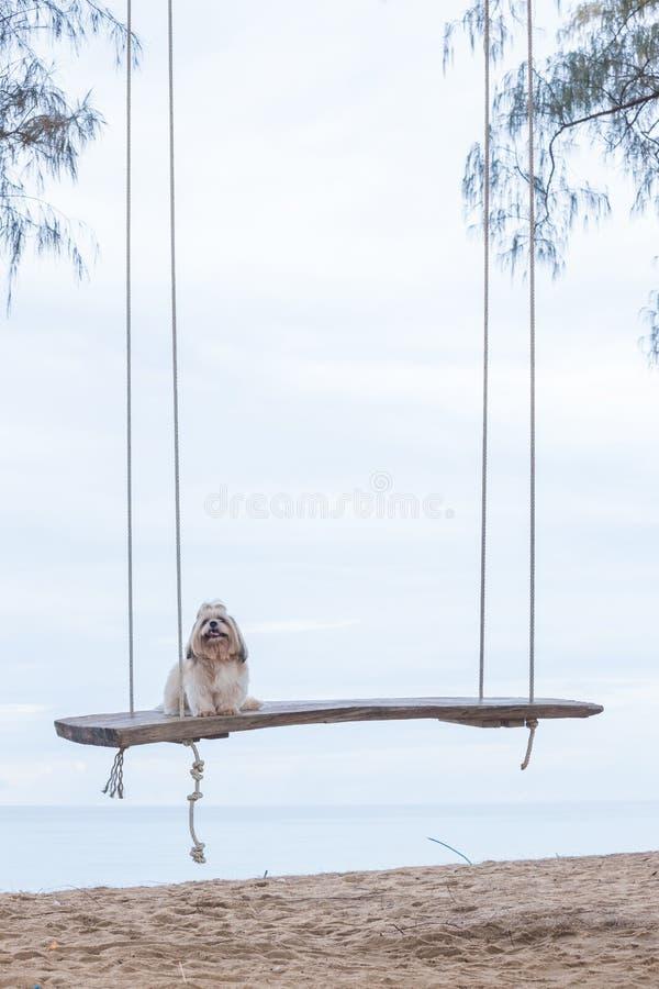 Långt hårhund och hav arkivfoto