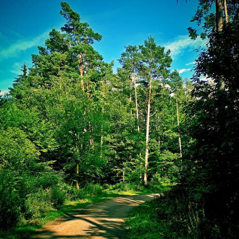 Långt i skog arkivfoton