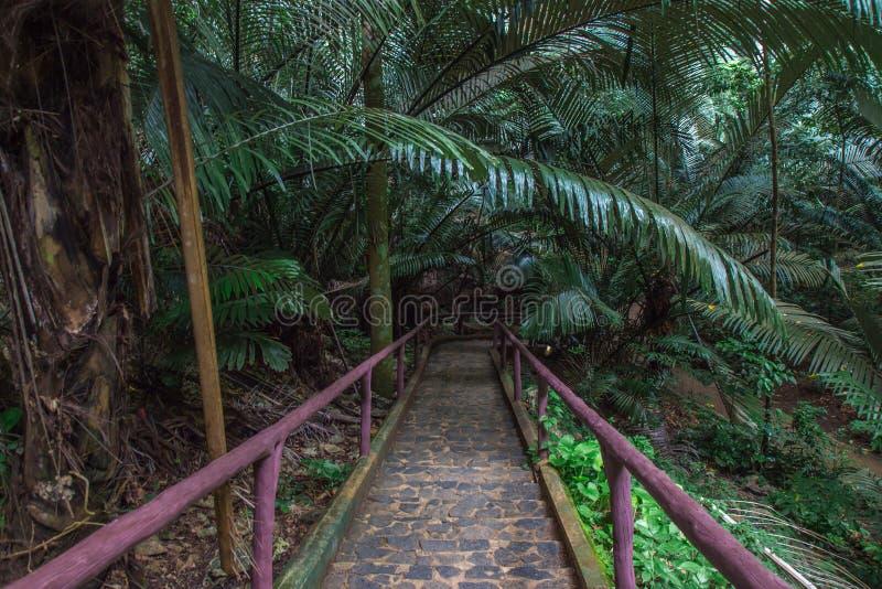 Långt i skog arkivbild
