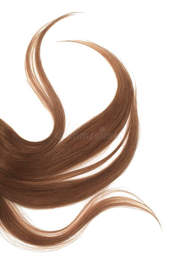 Långt ovårdat brunt mörkt hår som isoleras på vit bakgrund royaltyfri foto