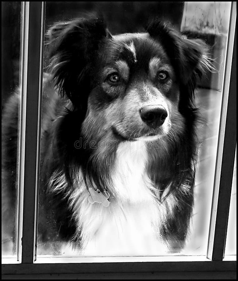 Download Låta mig kan någon arkivfoto. Bild av dörr, hund, fråga - 40352