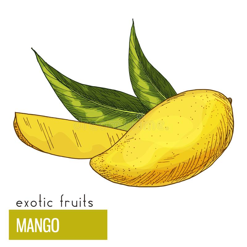 låter vara mango royaltyfri illustrationer