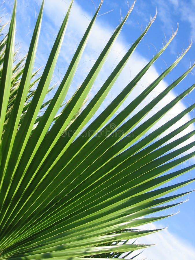 Download Låter vara spiky arkivfoto. Bild av leaves, grönska, leaf - 279038