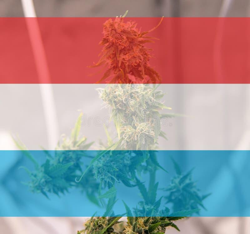 légalisation d'une utilité récréationnelle de marijuana au Luxembourg Cannab illustration libre de droits