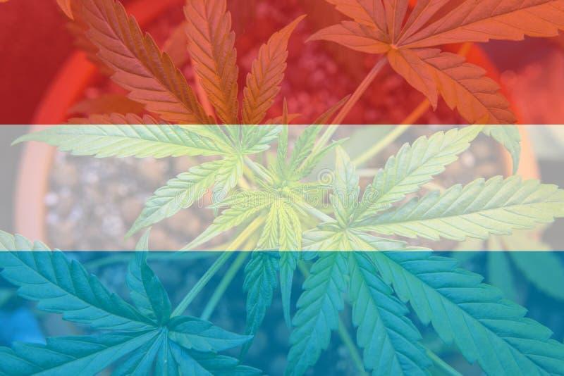 légalisation d'une utilité récréationnelle de marijuana au Luxembourg Cannab illustration stock