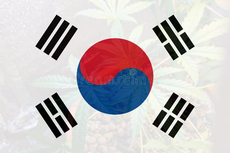 Légalisation de marijuana médicale en Sud-Coréen illustration libre de droits