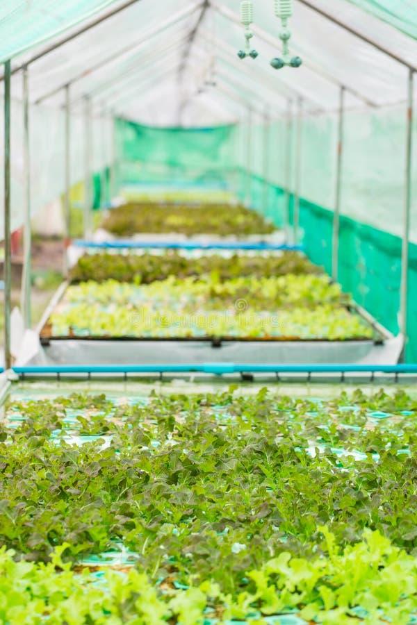 Download Légume De Culture Hydroponique Image stock - Image du jardin, agriculture: 45368757
