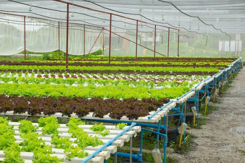 Download Légume De Culture Hydroponique Photo stock - Image du nourriture, ferme: 45369388