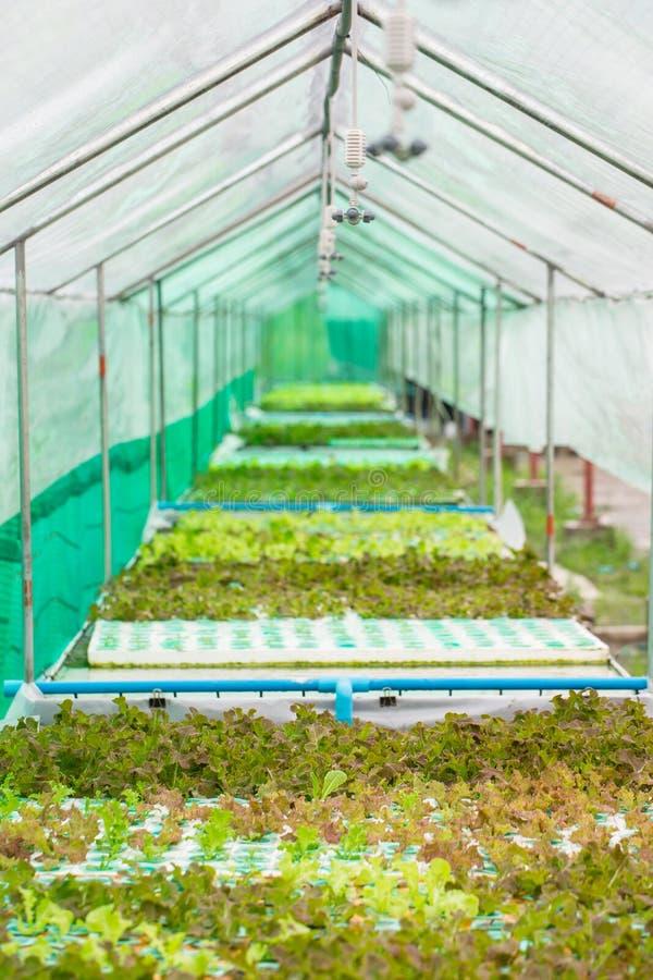 Download Légume De Culture Hydroponique Photo stock - Image du cultivez, asiatique: 45370602