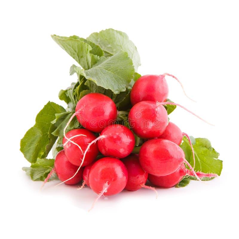 Légume de radis rouge photos stock