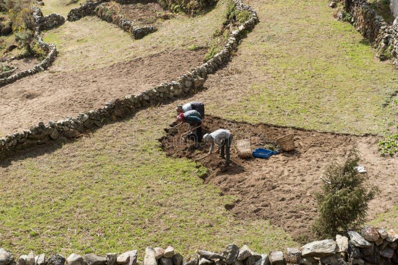 Légume local népalais de croissance de personnes dans le village, Népal images stock