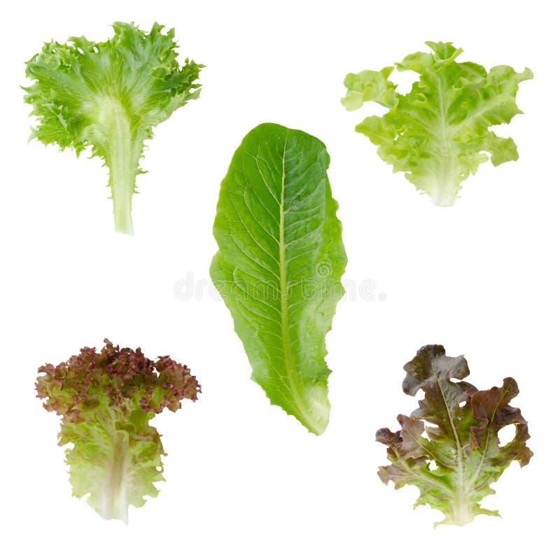 Légume organique d'isolement sur le fond blanc photos stock
