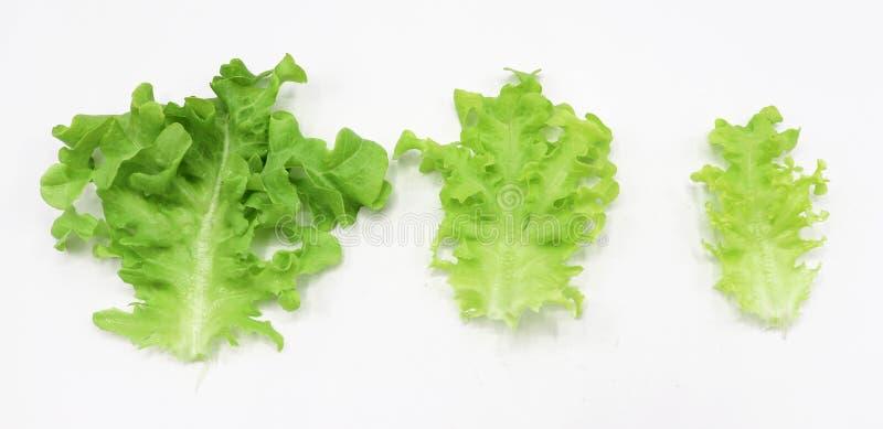 Légume organique pour la salade 'Iceberg' verte de frillice de salade d'isolement sur le fond blanc photographie stock libre de droits