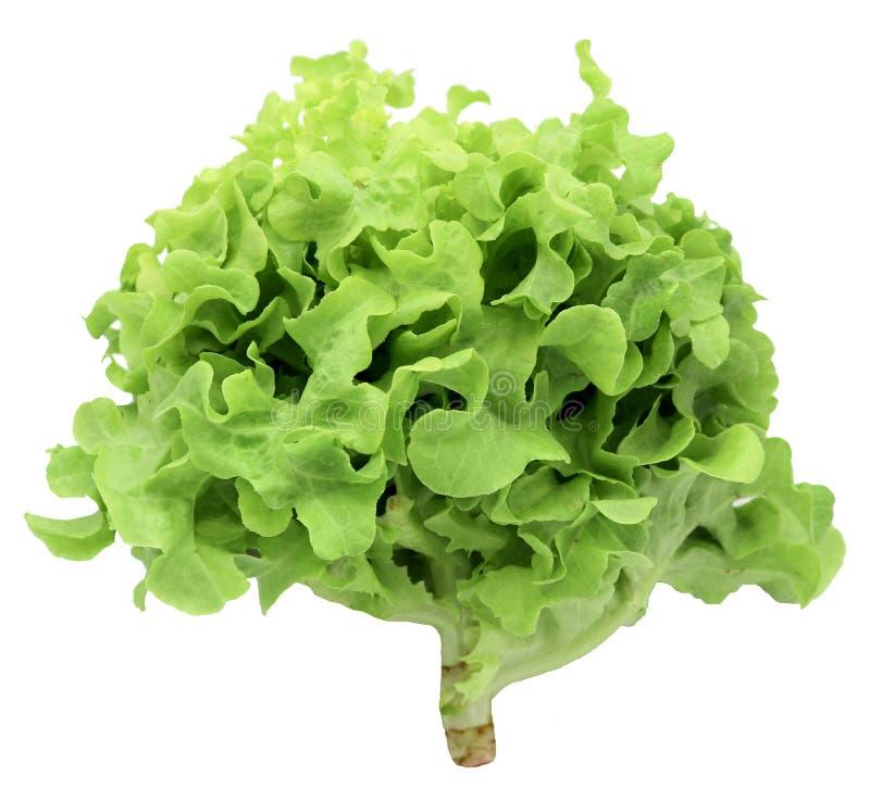 Légume organique pour la salade 'Iceberg' verte de frillice de salade d'isolement sur le fond blanc images stock