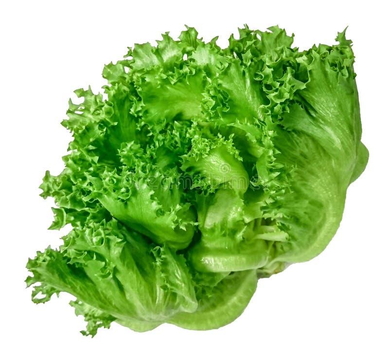 Légume organique pour la salade 'Iceberg' verte de frillice de salade d'isolement sur le fond blanc photo stock