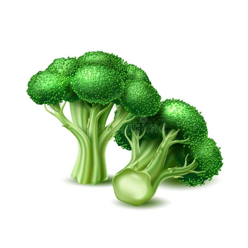 Légume réaliste de chou de brocoli de vecteur illustration de vecteur