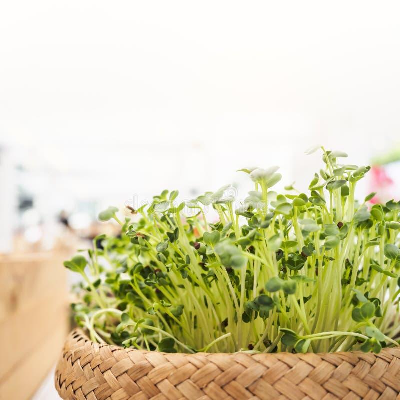 Légume vert organique dans le mode de vie sain de consommation de panier photographie stock