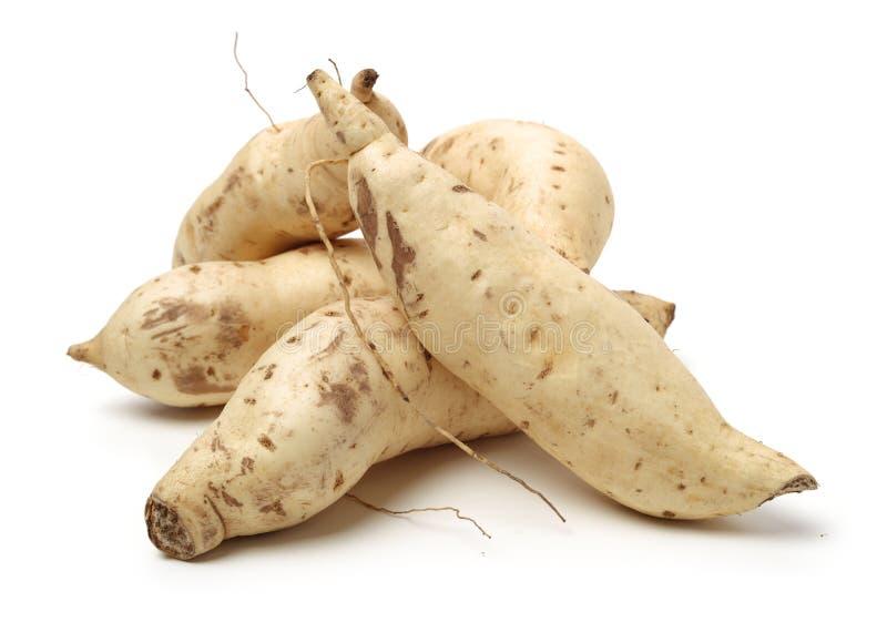 légumes à racine crus, patate douce non traitée et photographie stock
