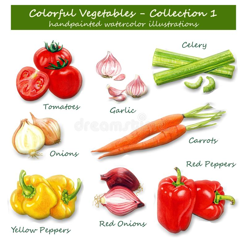Légumes colorés - collection 1 - illustrations peintes à la main d'aquarelle photos stock