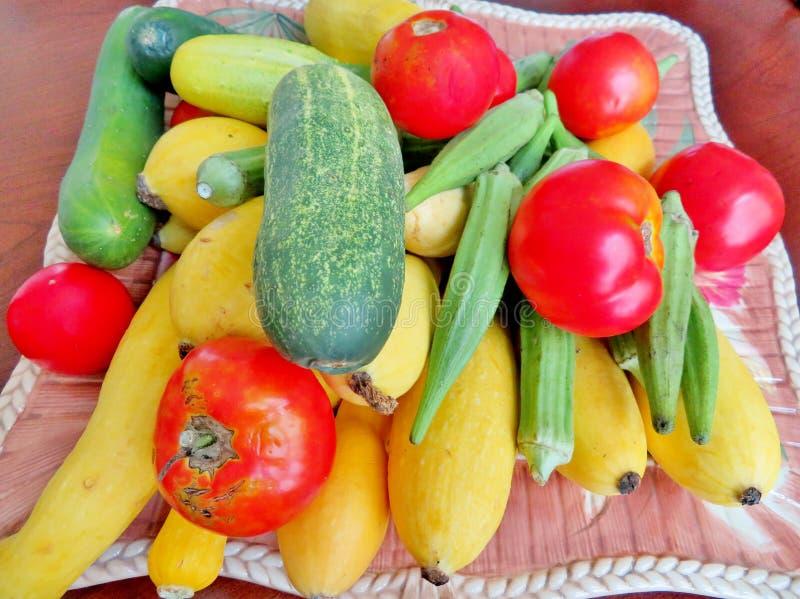 Légumes, concombres, courge, gombo et tomates d'été photos libres de droits