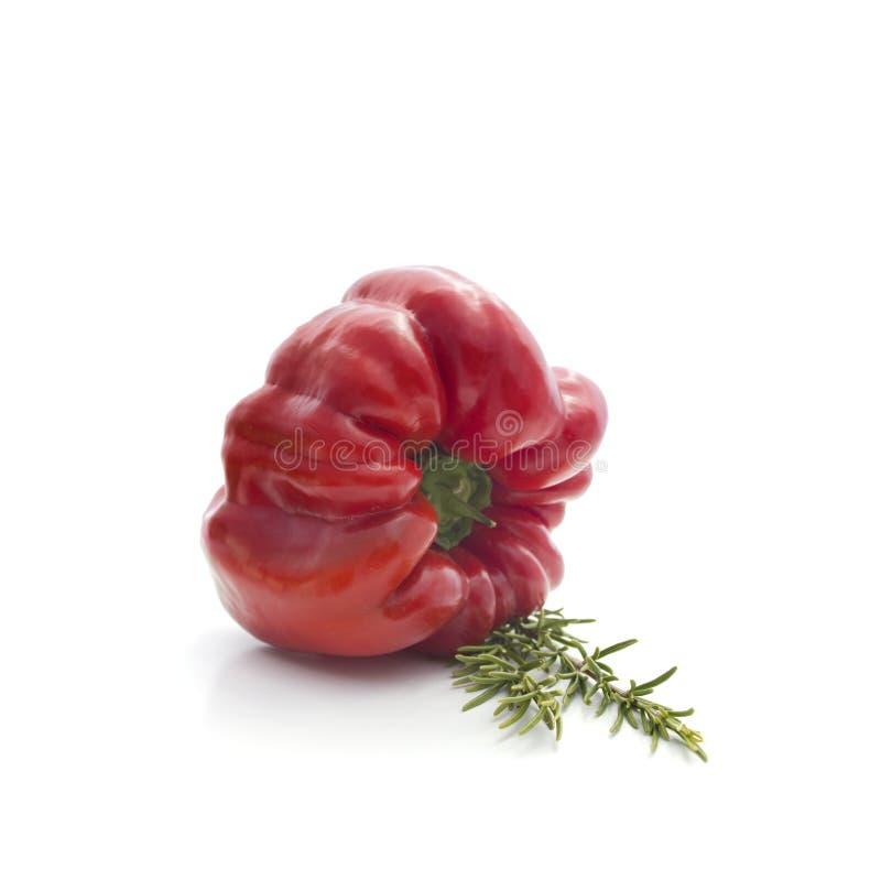 Légumes d'été sur le blanc : poivre et romarin images libres de droits