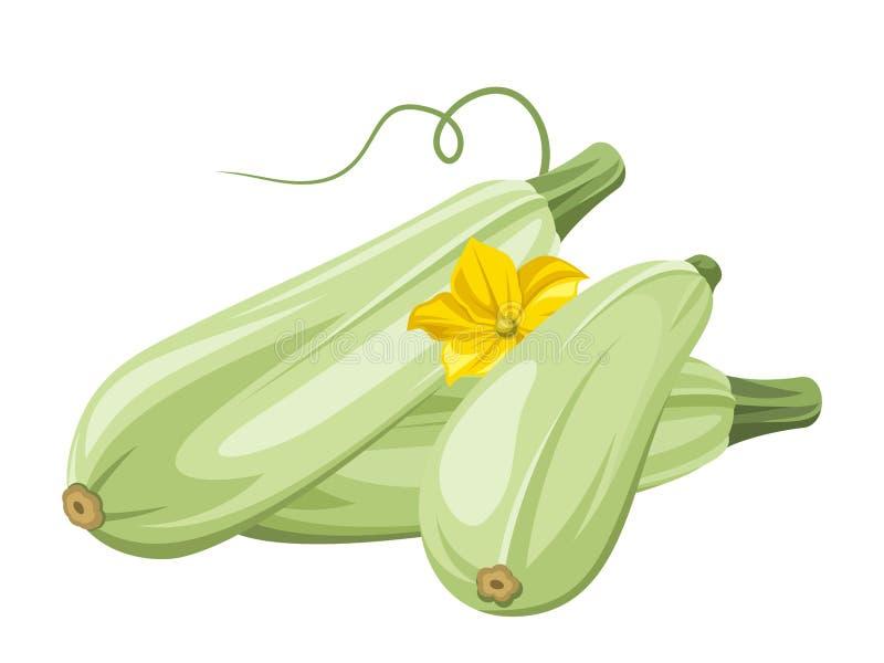 Légumes de moelle /courgette. illustration de vecteur