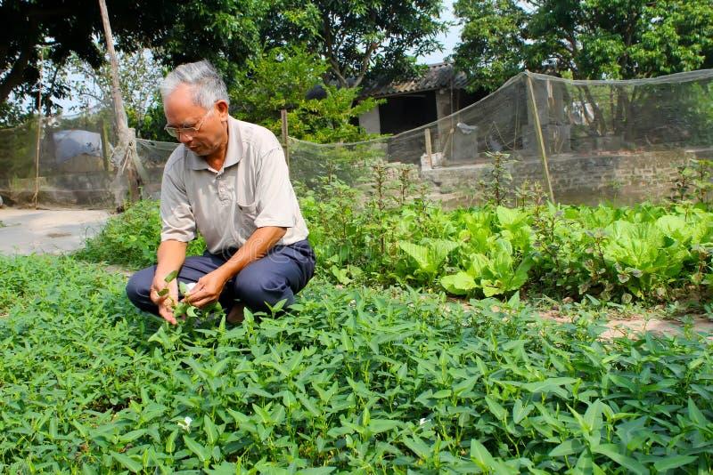 Légumes de récolte d'agriculteur images libres de droits