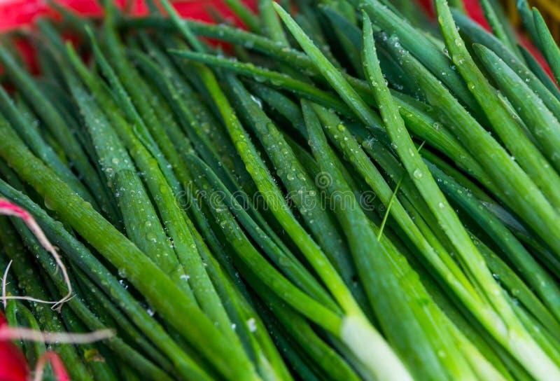 Légumes de ressort - oignon, radis, aneth, salade à vendre photographie stock libre de droits