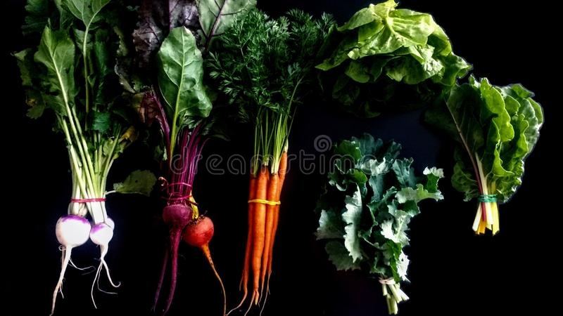 Légumes de ressort sur le fond noir images libres de droits