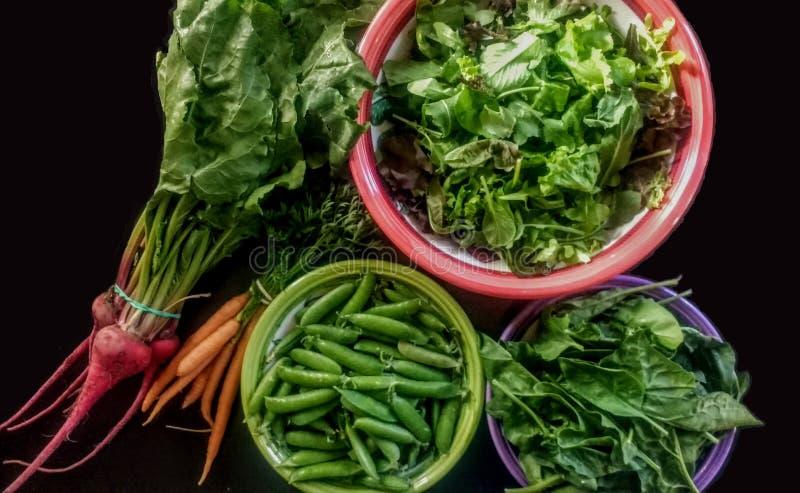 Légumes de ressort sur le fond noir photographie stock libre de droits