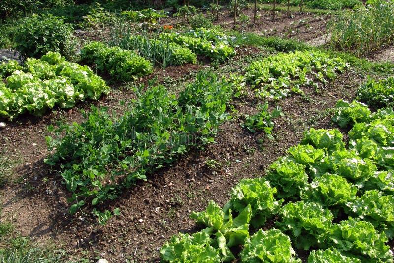 Légumes de Springtame image stock