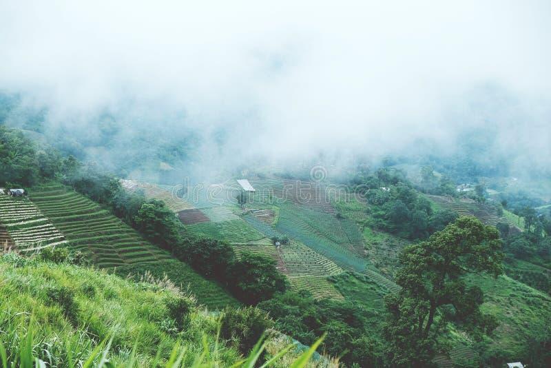 Légumes et une échelle d'étape chez Monjam Chaingmai Thaïlande image libre de droits