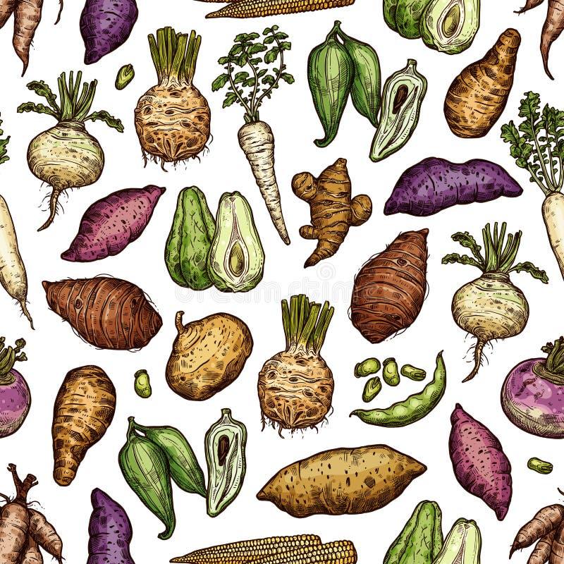 Légumes exotiques et modèle sans couture de racines illustration libre de droits