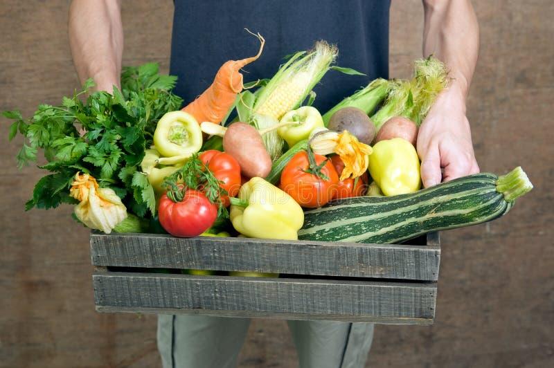 Légumes frais image libre de droits