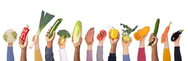 Légumes frais dans des mains d'isolement sur le fond blanc photographie stock
